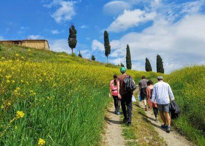 Tuscan green fields