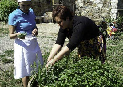 fresh herbs from the garden