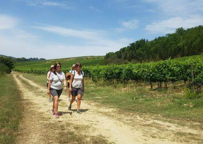 walking in vineyards