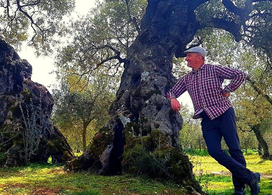 A plant that has seen a lot – Story of a millenary olive tree