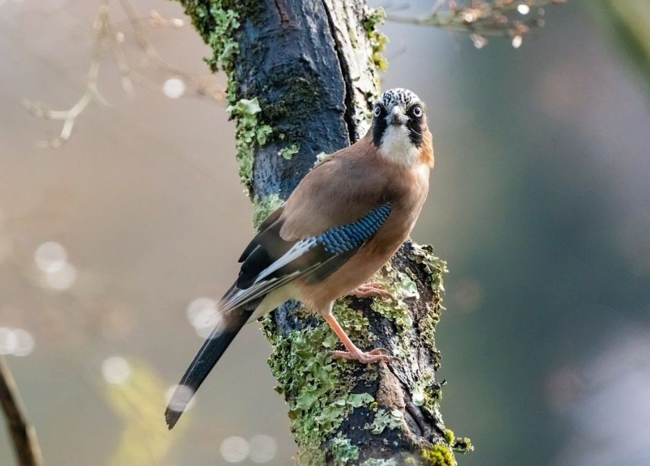 Forest grows thanks to birds