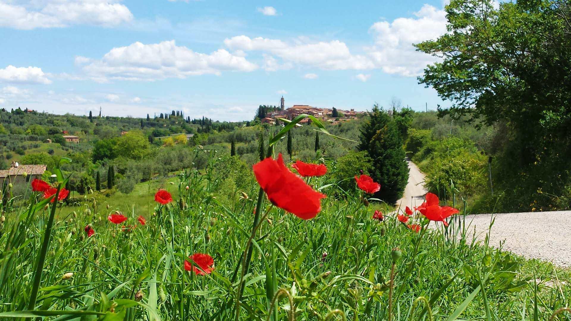 tuscan splendors walking tour